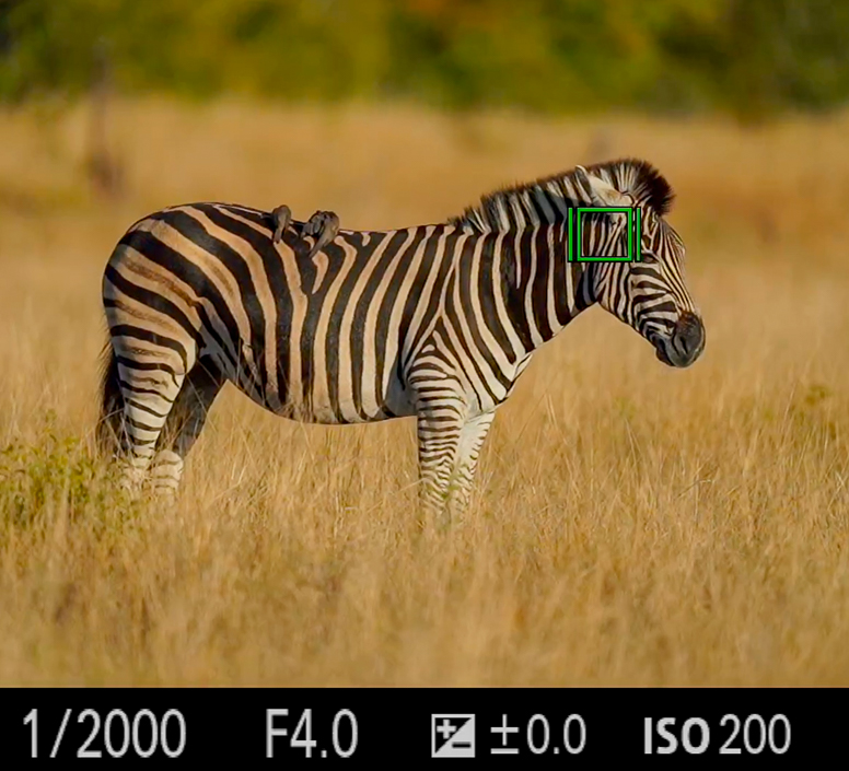 Recorded Webinar - In Depth Camera Setup for Wildlife Photography